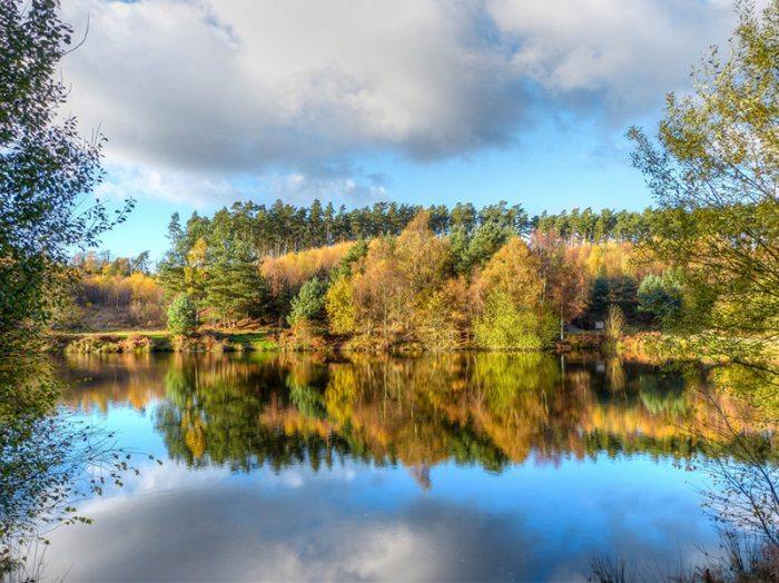 Cannock Chase. Credit: pxhere.com