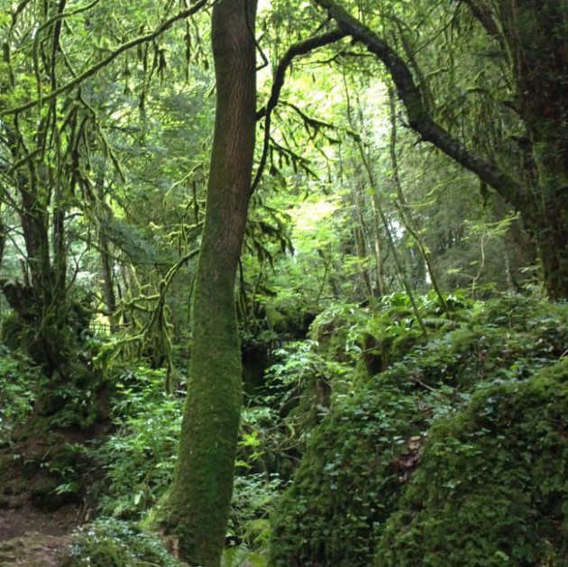 Puzzlewood, Forest of Dean