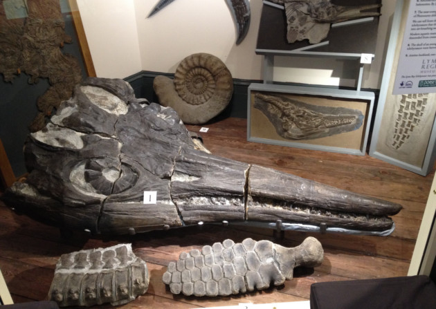 Treasures of the Lyme Regis Museum include the ichthyosaur skull found by Mary Anning and her brother Joseph in 1811
