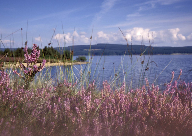 Kielder Water is the biggest man-made lake in Northern Europe. Photo: Visit Northumberland