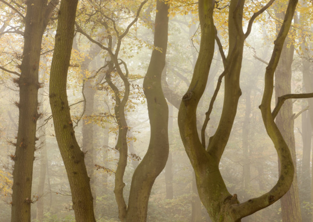Autumnal colour and mist, Beacon Hill Country Park, Leicestershire. Photo: ROSS HODDINOTT