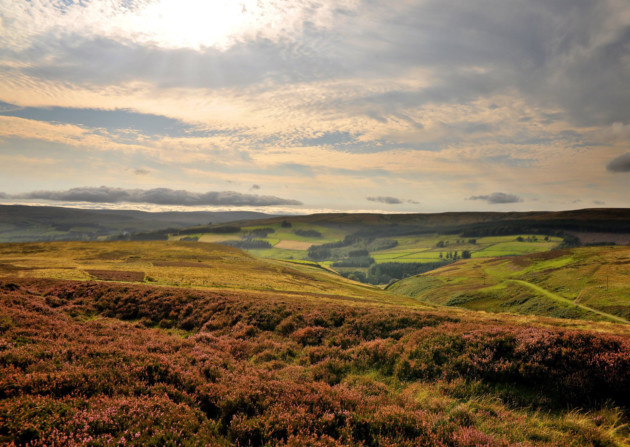 Moorland in Weardale, North Pennines Area of Outstanding Natural Beauty. Photo: Visit County Durham
