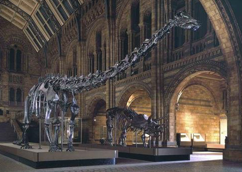 Diplodocus. © The Trustees of the Natural History Museum, London