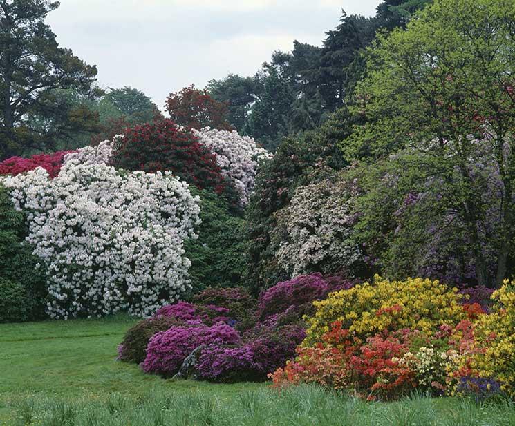 Rowallane, spring gardens