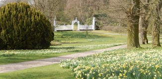 Cholmondeley Castle, daffodils, gardens