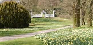 Cholmondeley Castle, daffodils, gardens