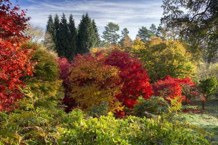 Winkworth Arboretum. Credit: National Trust/John Miller