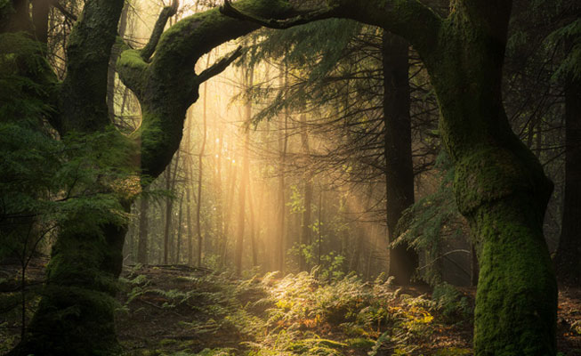 Simon Baxter – 'Guardians of the Forest'. Landscape Photographer of the Year awards