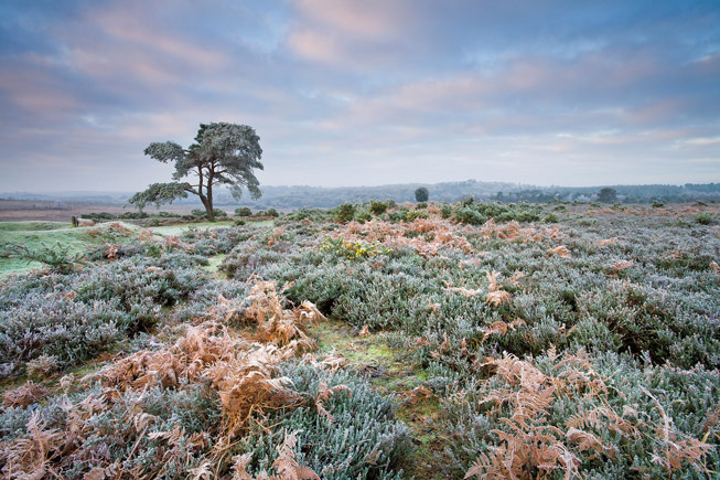New Forest National Park, Hampshire. Credit: Adam Burton/Alamy