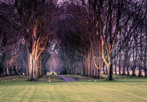 The magnificent mile long avenue of four hundred lime and beech trees planted in 1827 at Luckham Park