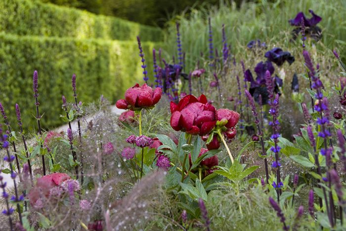 RHS Chelsea Flower Show showing a detail of the planting in The Laurent-Perrier Garden designed by Luciano Giubbilei. Credit: Visit Britain